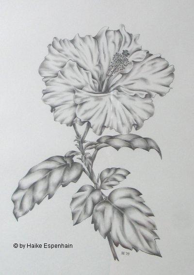 Zeichnung Bleistift Aquarell Pastell